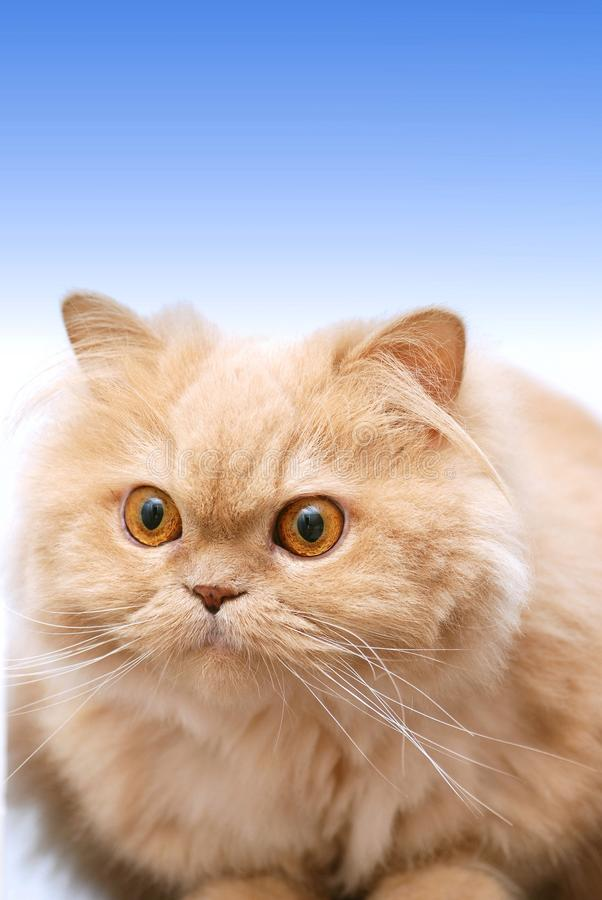 Download Isolated cat stock photo. Image of cute, portrait, conceptual - 10008746