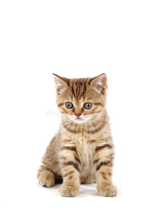 Isolated cat. Cat isolated on white background stock photography