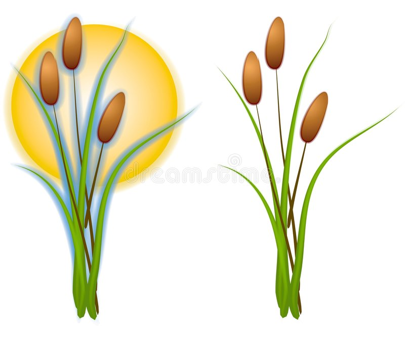 isolated cattails clip art stock illustration illustration of tail rh dreamstime com cattails clipart black and white Cattail Silhouette