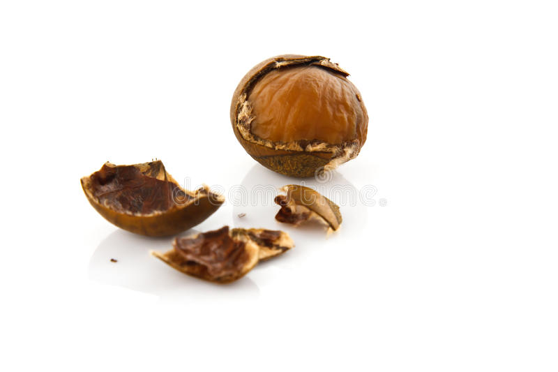 Isolated chestnut. On white background royalty free stock photography