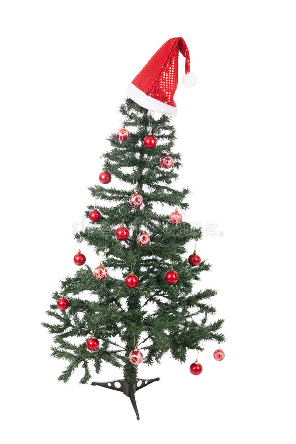 An isolated Christmas tree stock photo