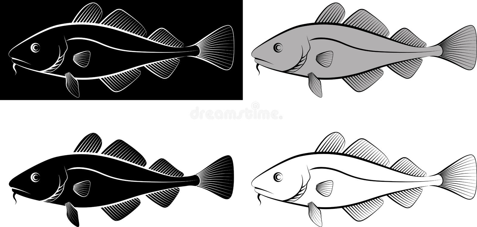 Cod. Isolated cod fish - clip art illustration and line art vector illustration