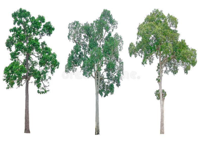 Isolated collection of trees. stock images