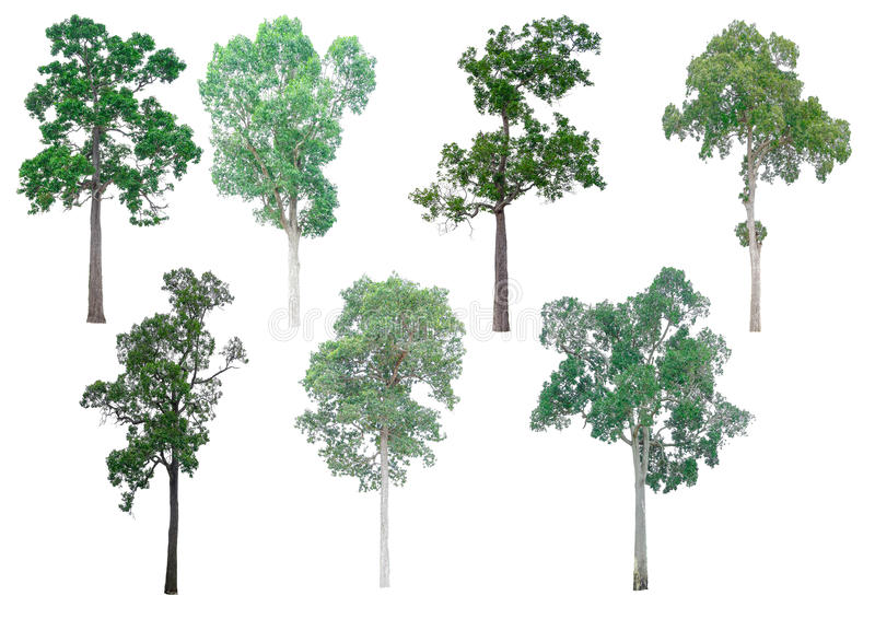 Isolated collection of trees. stock photography