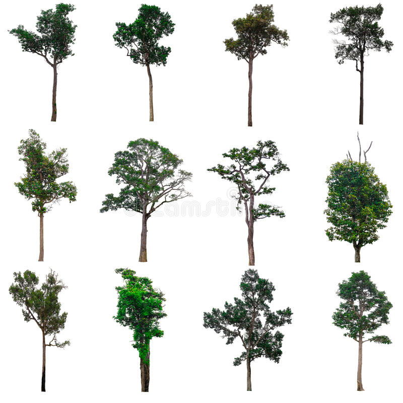Isolated collection of trees. royalty free stock image