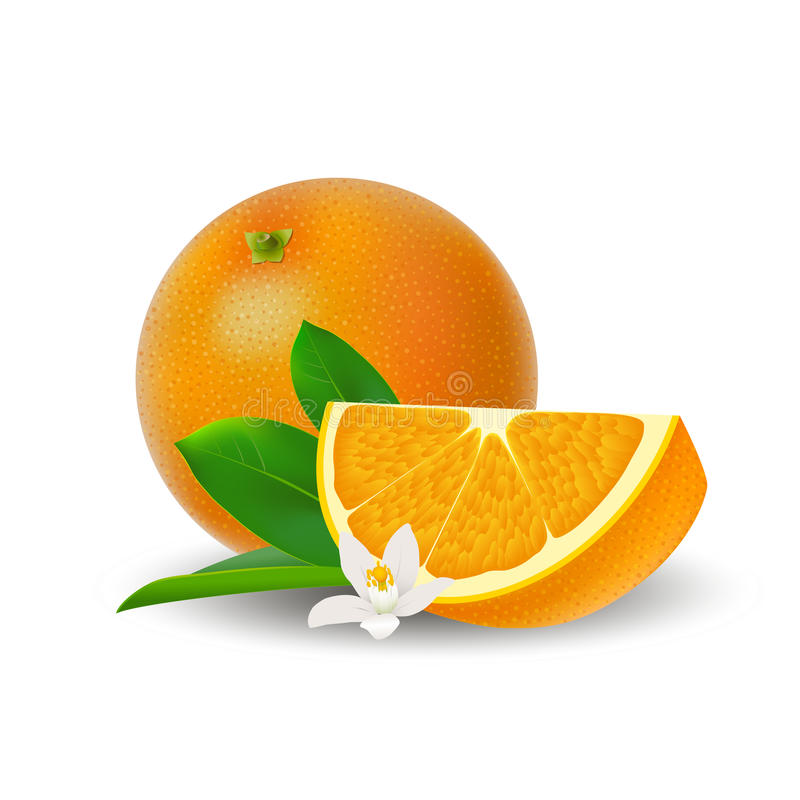 Isolated colored group of orange, slice and whole juicy fruit with white flower, green leaf and shadow on white background. Realis royalty free illustration