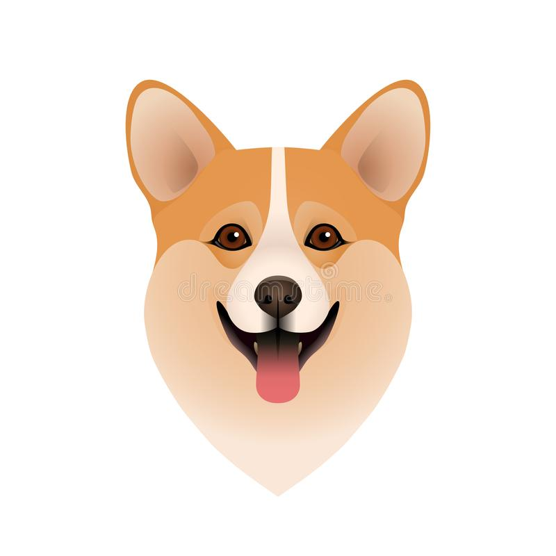 Isolated colorful head of happy welsh corgi pembroke or cardigan on white background. Flat cartoon breed dog portrait. Isolated colorful head of happy welsh stock illustration
