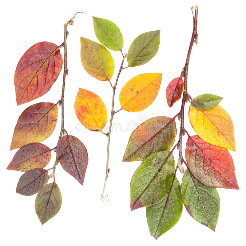 Download Isolated Colorful Autumn Tree Leaves Stock Image - Image: 27305011