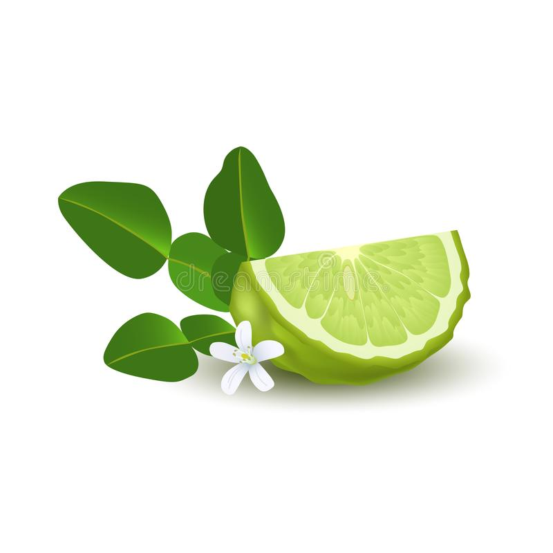 Free Isolated Colorfull Green Slice Of Juicy Bergamot, Kaffir Lime With Green Leaves, White Flower And Shadow On White Background. Real Royalty Free Stock Photos - 112857808