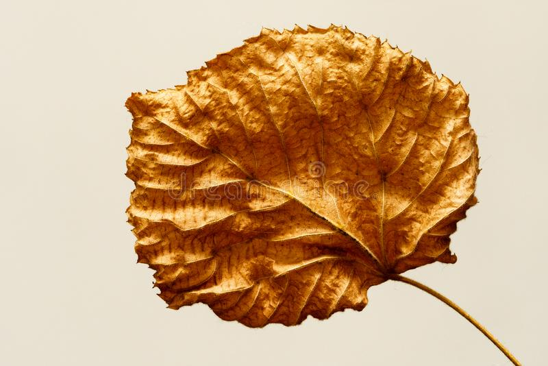 Isolated contrasted leaf close-up abstract. In colour royalty free stock images