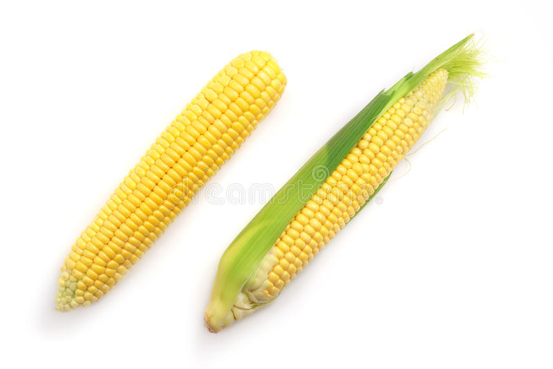 Download Isolated corn stock image. Image of fresh, food, maize - 14929223
