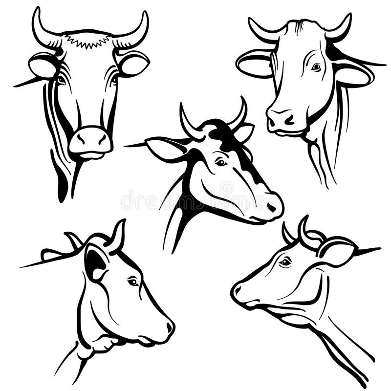 Isolated cow head vector portraits, cattle faces for farm natural dairy products packing vector illustration