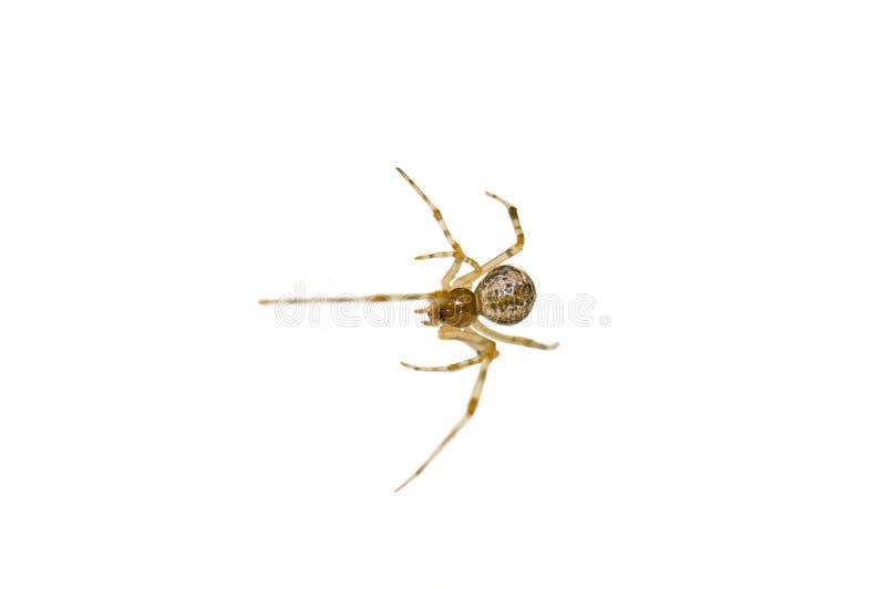 Isolated creepy macro spider stock photo