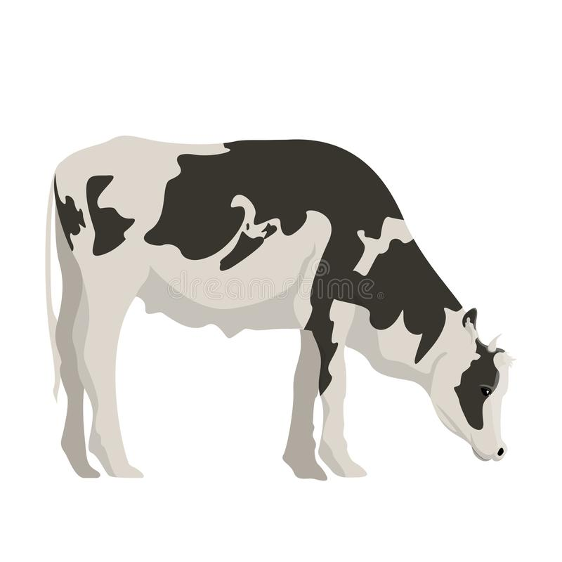 Isolated cute cow royalty free illustration