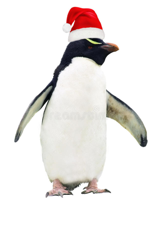 Isolated dirty penguin royalty free stock photo