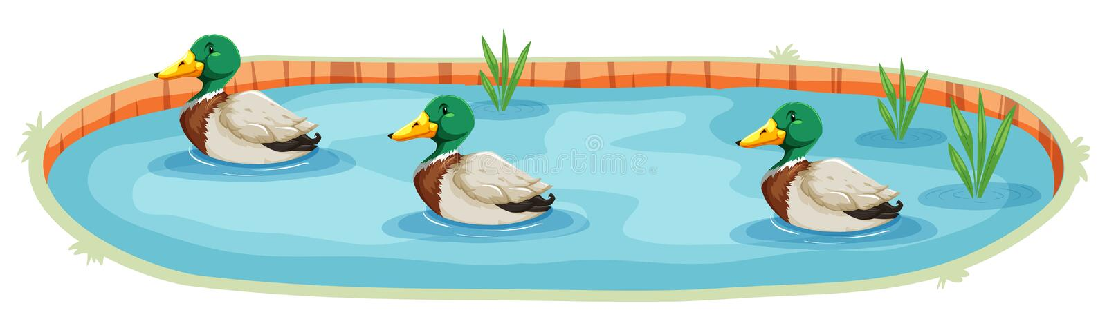 An isolated duck pond. Illustration royalty free illustration