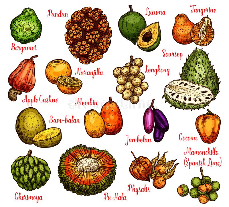 Isolated exotic fruits, vector sketch stock illustration