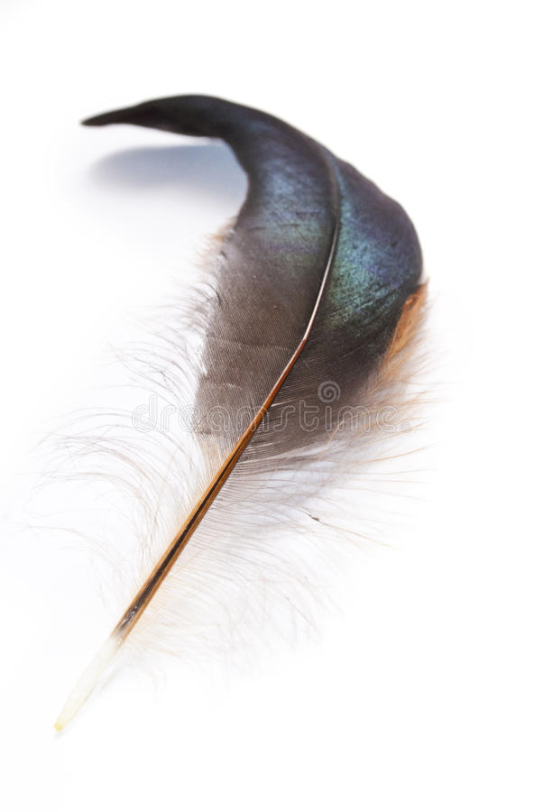 Download Isolated feather stock photo. Image of feather, green - 18465310
