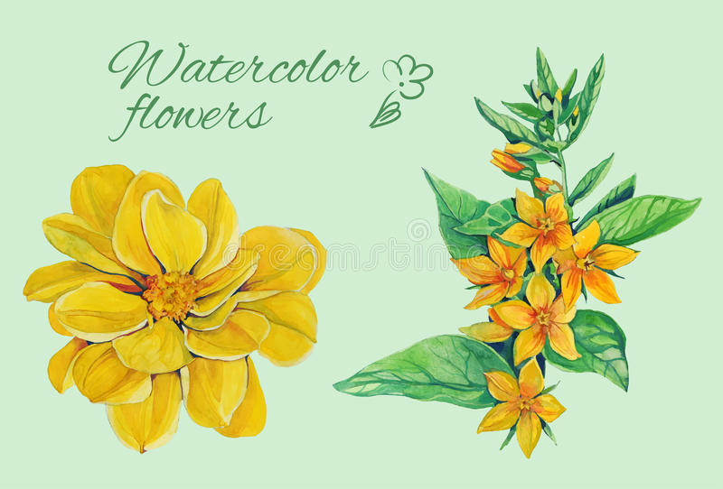 Isolated floral elements of dahlia with laeves vector illustration