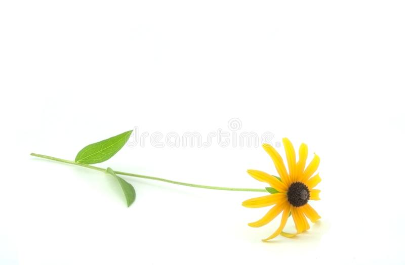 Download Isolated flower stock photo. Image of blossom, detail - 10652908