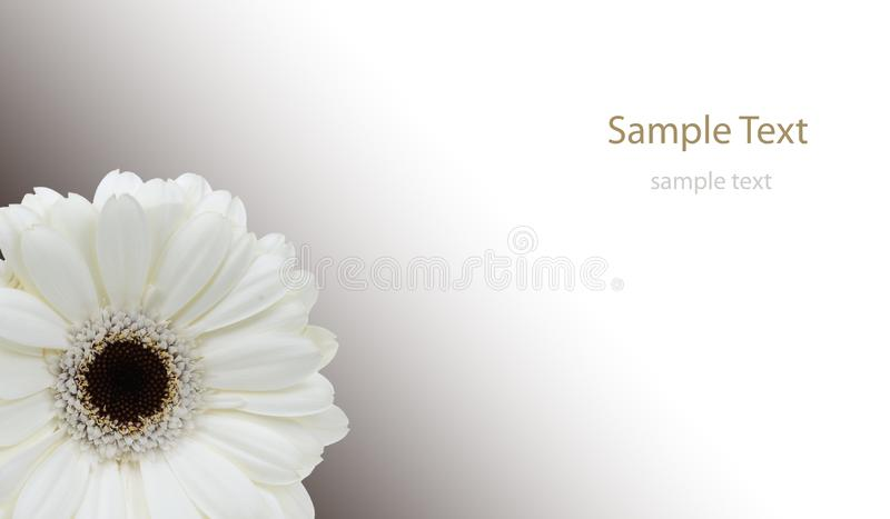 Isolated flower royalty free stock photo