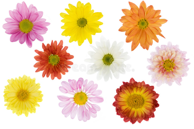 Isolated flowers royalty free stock images