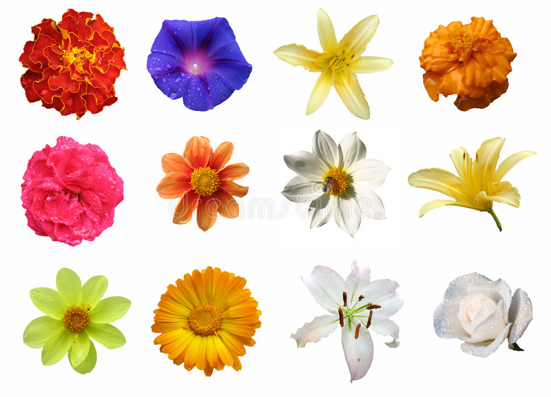 Isolated Flowers stock image
