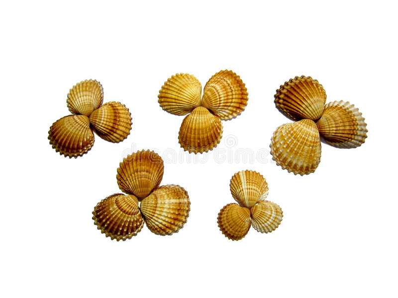isolated flowers made of seashells stock images