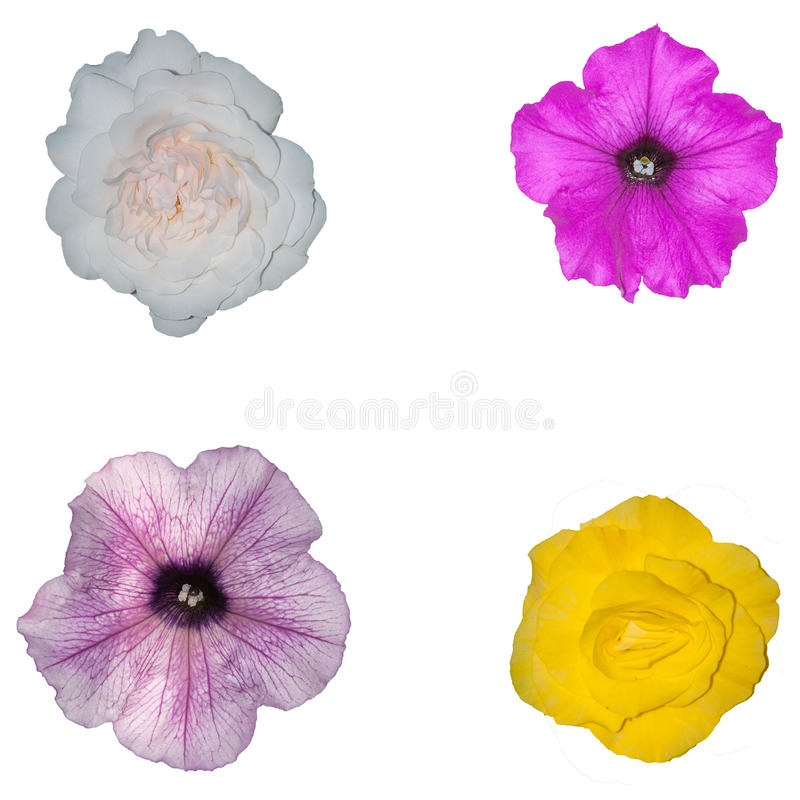Isolated flowers stock photos