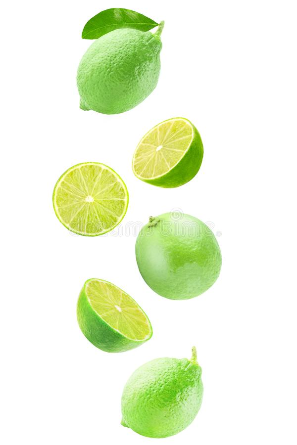 Isolated flying lime fruit wedges. Isolated flying citrius. Fresh falling lime isolated on white background with clipping path as a packaging design and royalty free stock image