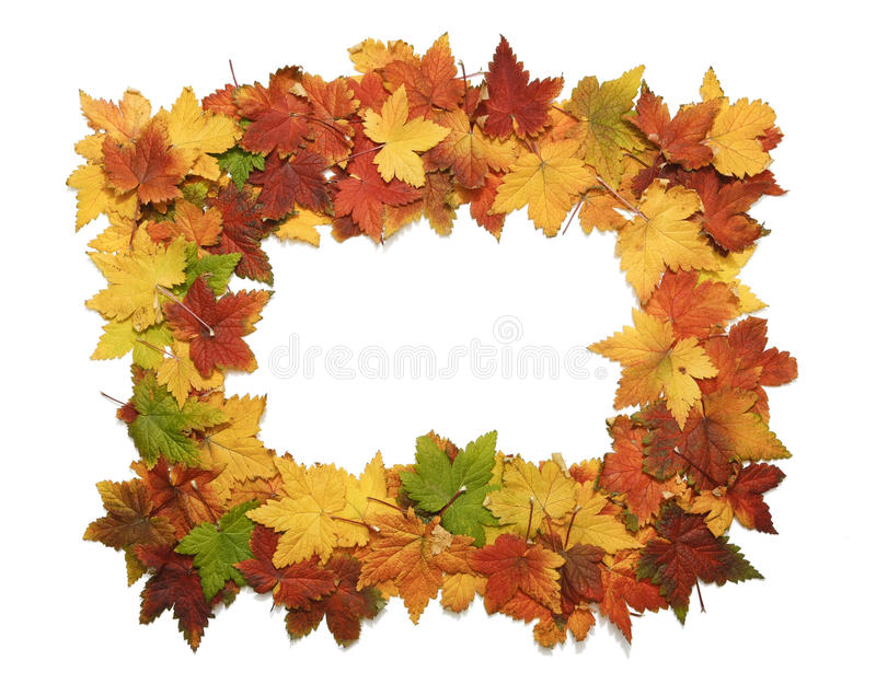 Download Isolated Frame Of Fall Leaves Stock Photo - Image: 21443622