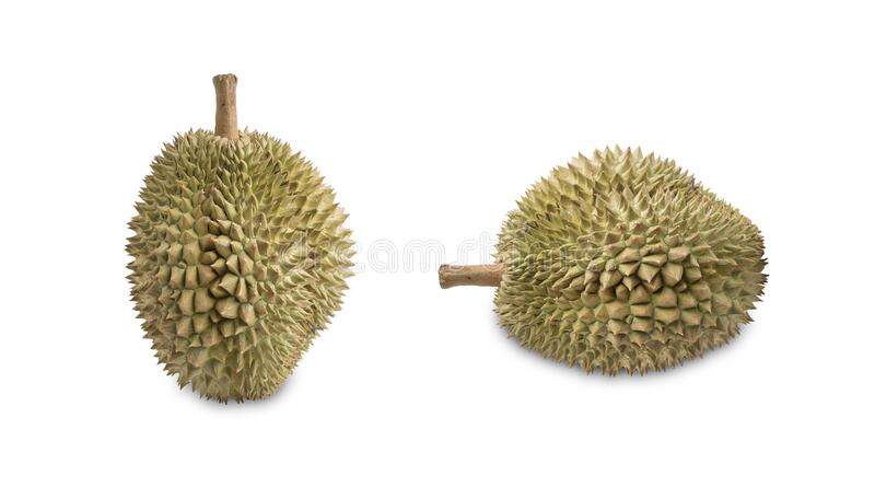 Isolated of fresh durian stock images