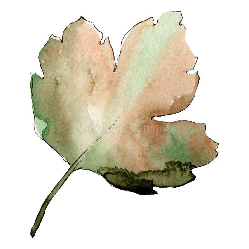 Isolated gooseberry leaf illustration element. Green leaf. Watercolor background illustration set. vector illustration