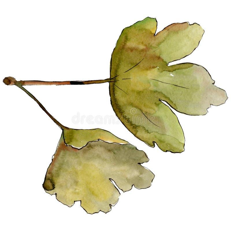 Isolated gooseberry leaf illustration element. Green leaf. Watercolor background illustration set. stock illustration