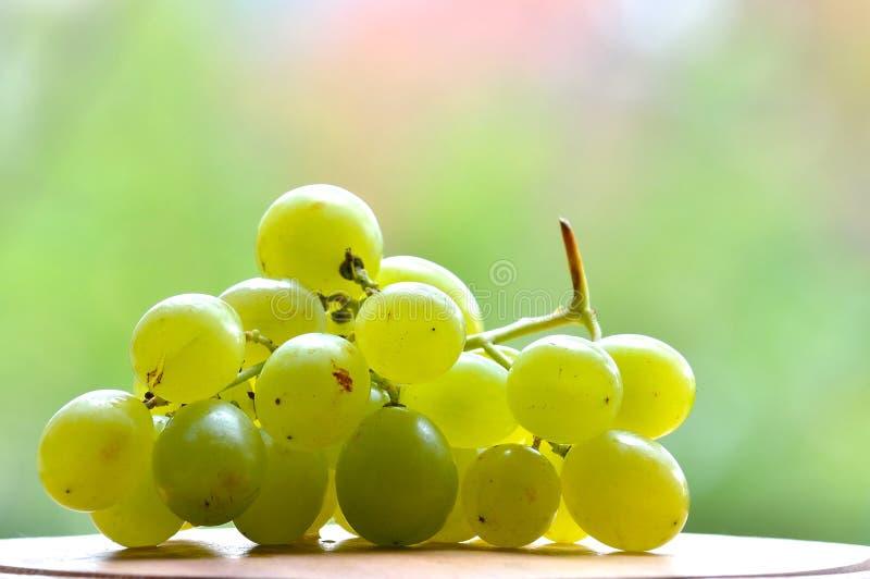 Isolated grape stock photo