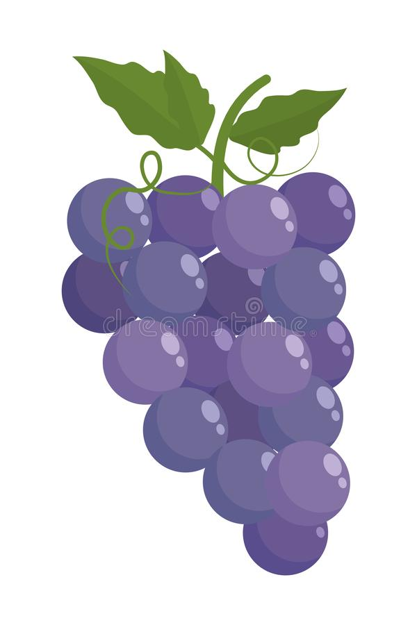 Isolated grapes fruit with leaves design. Grapes with leaves design, Fruit healthy organic food sweet and nature theme Vector illustration vector illustration