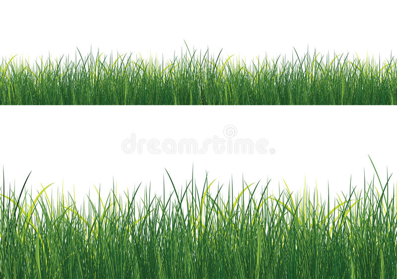 Isolated Grass royalty free illustration