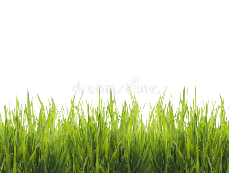 Isolated green grass stock photos