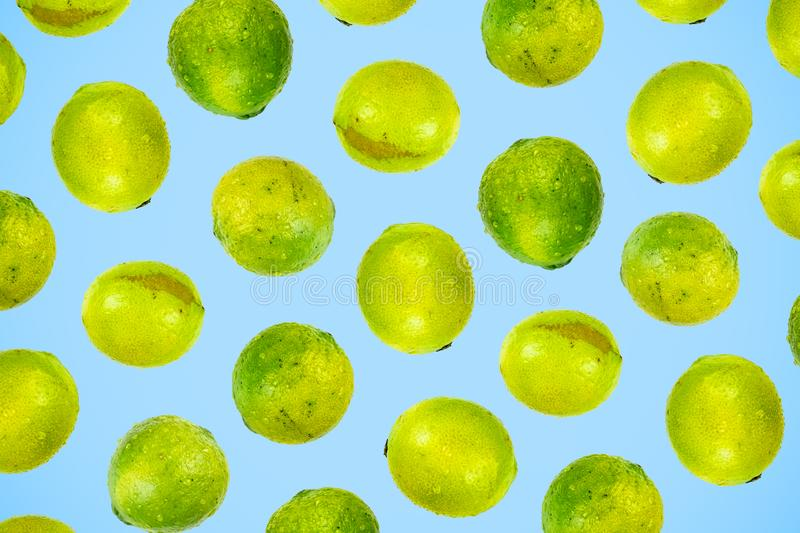 Isolated green lime pattern or wallpaper on light blue background. Summer concept of fresh ripe whole lime fruits shot from above royalty free stock photo