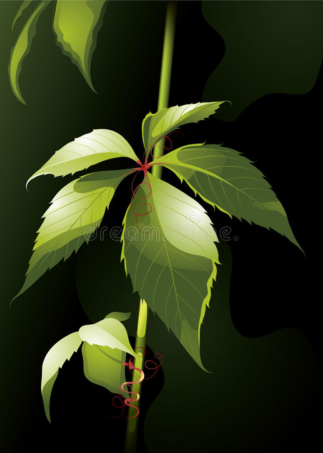 Download Isolated Green Plant Royalty Free Stock Image - Image: 10763516