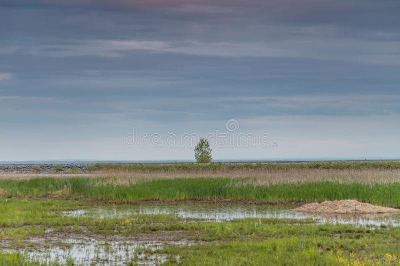Isolated green tree in a grassy field covered with mud during daytime stock images