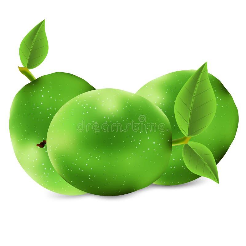 Isolated green walnut stock illustration