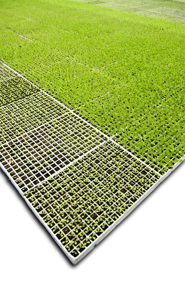 Isolated Greenhouse stock photo