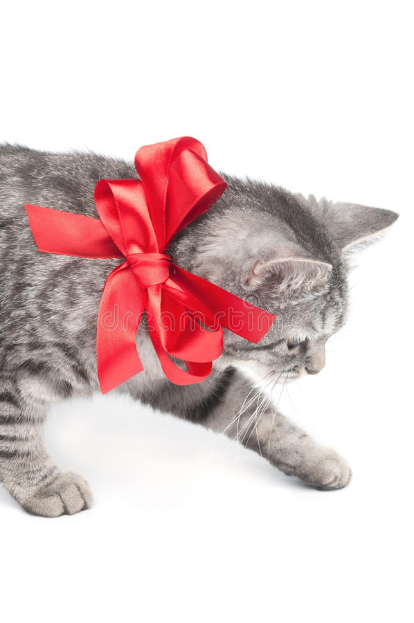 Free Isolated Grey Cat With Red Bow Stock Images - 19766034
