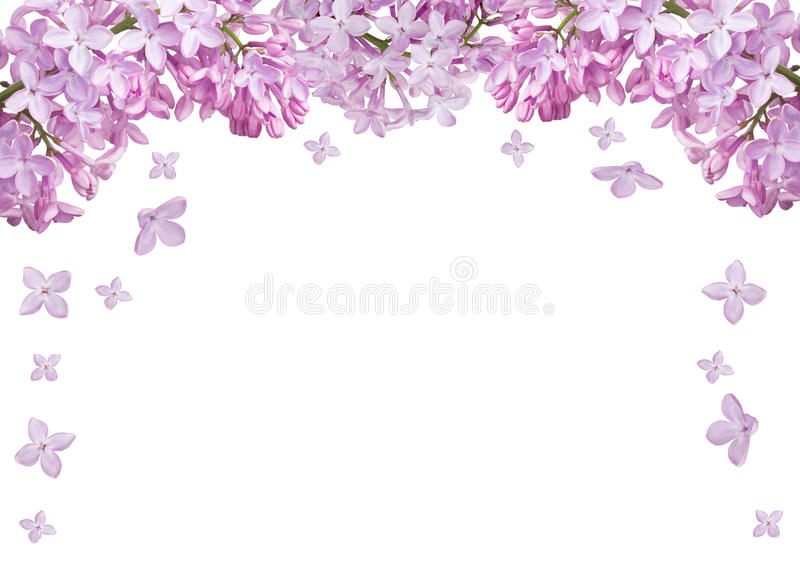 Isolated half frame from light lilac blooms stock photo