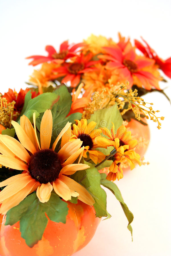 Isolated Halloween Flowers royalty free stock photo