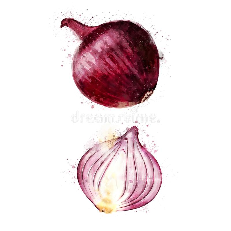 Red Onion On White Background. Watercolor Illustration ...