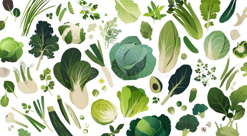 Leafy greens template background, isolated herbs and vegetables. Isolated herbs and vegetables managed into pattern, leafy greens template background vector illustration