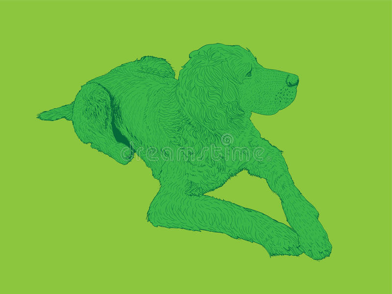 Isolated hound dog