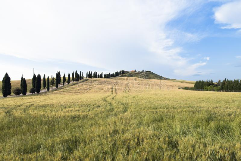 An isolated house and cypresses in a field in Val d`Orcia or Valdorcia, a very popular travel destination in Tuscany, Italy stock images